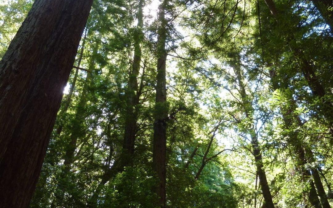 Meditating Trees