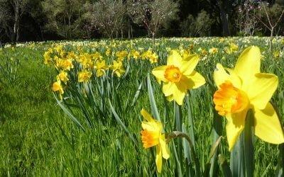 Springing Forth