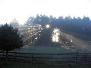 Light through trees and fog