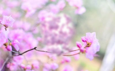 Spring – and Grace – Will Arrive