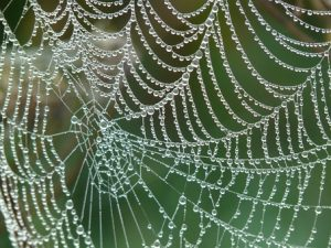 web with dewdrops