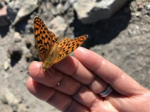 A butterfly on my finger