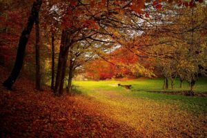 A park in autumn with leaves turning colors