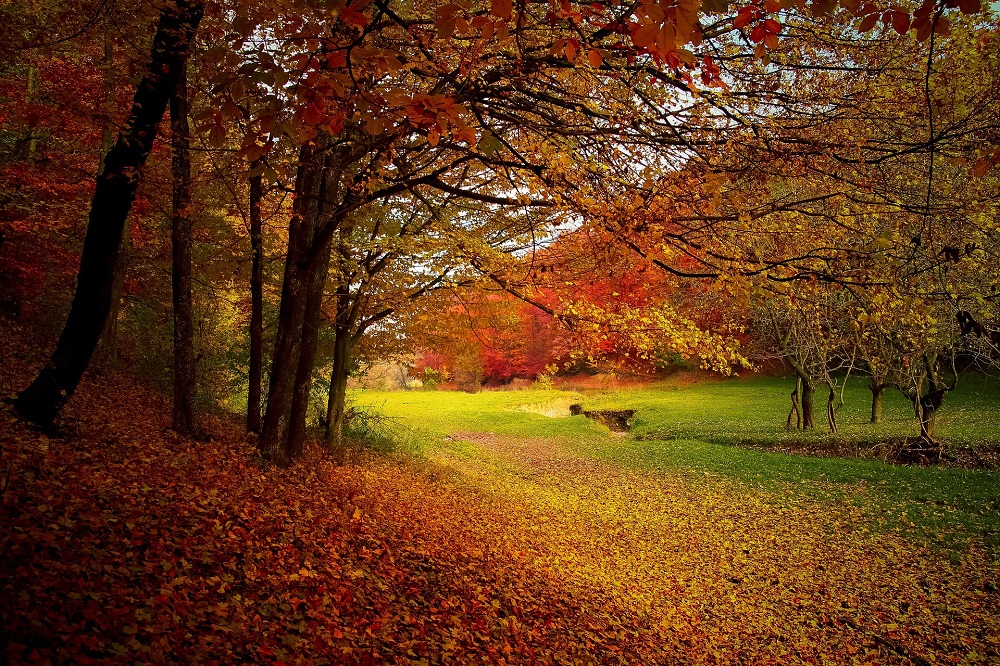 Autumn – A Time of Reflection