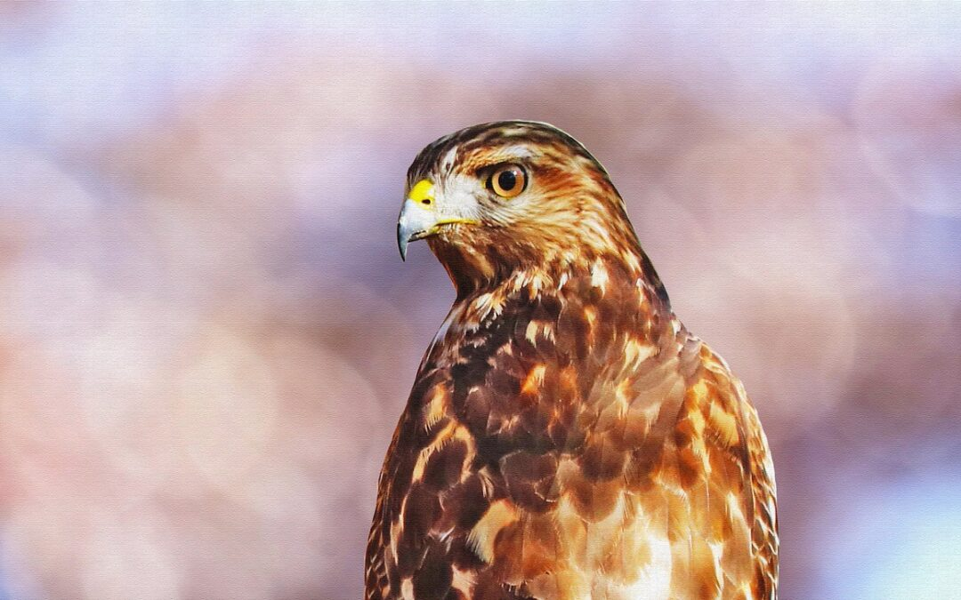 The False Hawk and the Real One: Ecotherapy Magic
