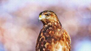 A Hawk on a perch